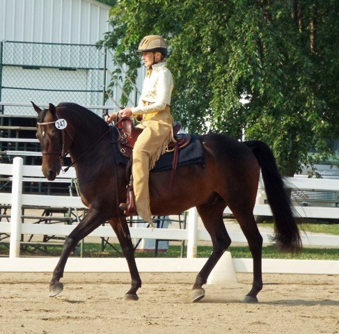 Western Dressage Lessons with Karen Graves